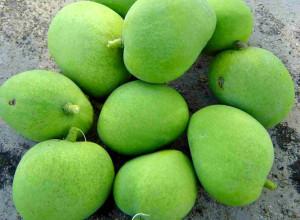 Green-mangoes
