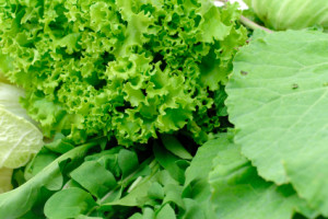 Leafy vegetables
